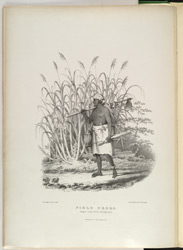 'Field Negro, Sugar Cane in Background', plate from Richards Bridgens' 'West India Scenery', 1836